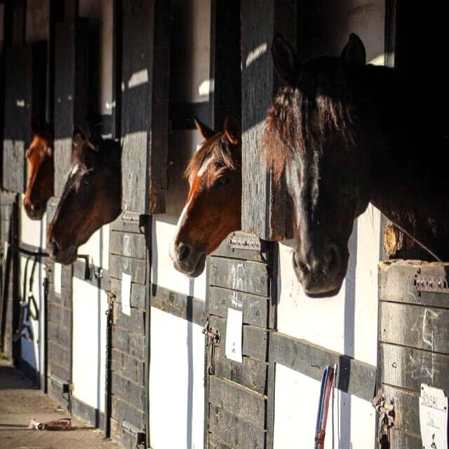 konie w boksach